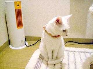 この暖房壊れてる?