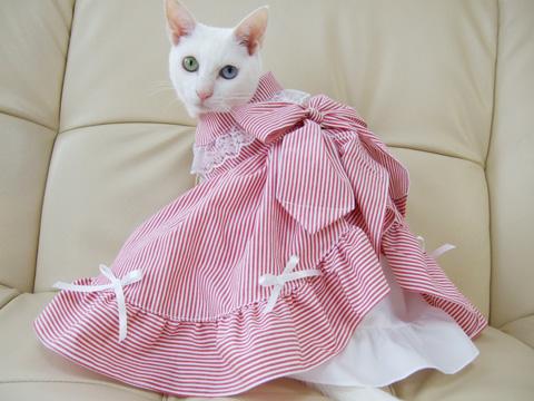 ドレスでキメっ☆